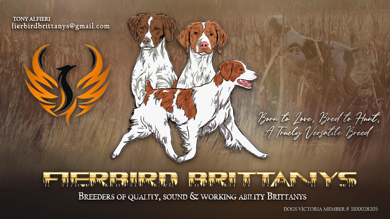 Fierbird Brittanys